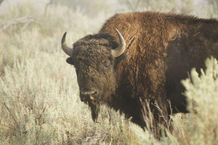 buffalo-neck-plastic-surgery-terms-to-retire-w724