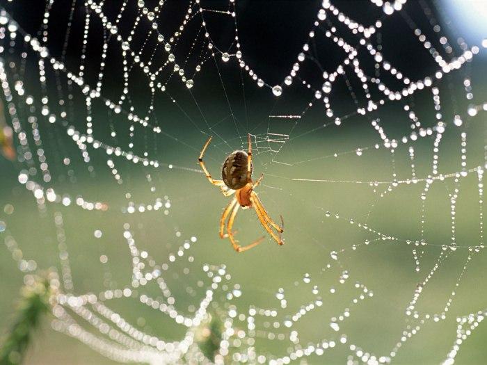 teia-de-aranha-portal-do-professor_mec