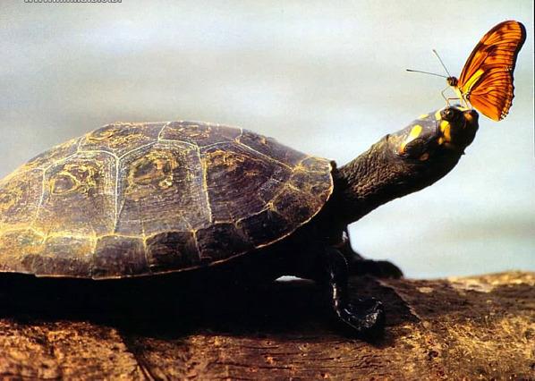 AA-tartaruga-7