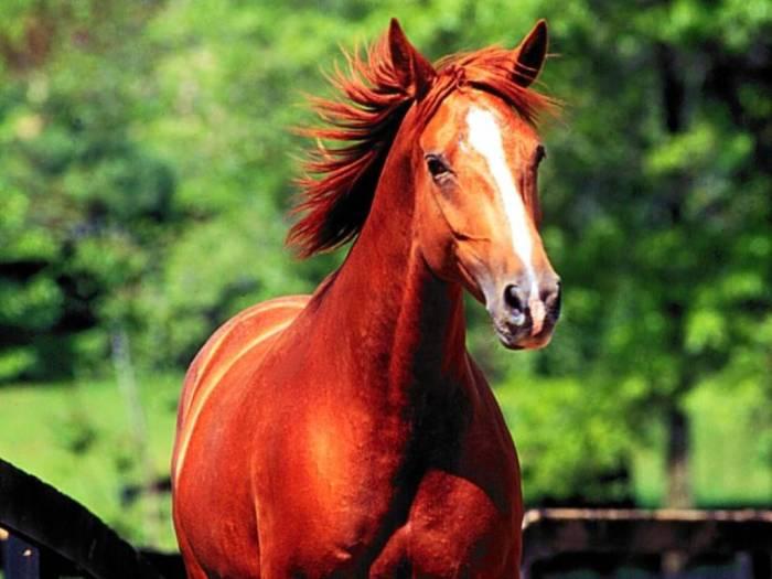 cavalo3