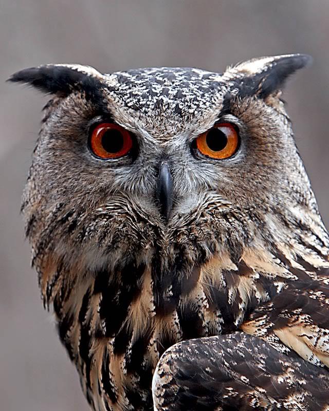 002_owl